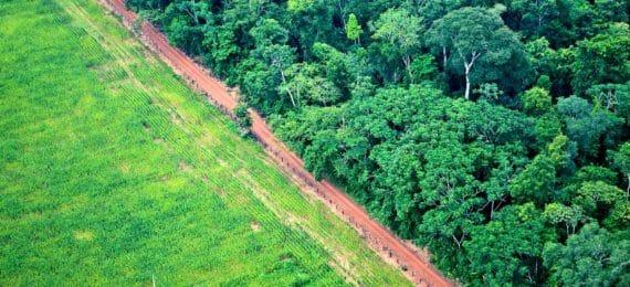 aerial shot of deforestation for agriculture
