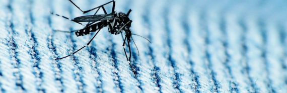 mosquito on blue fabric