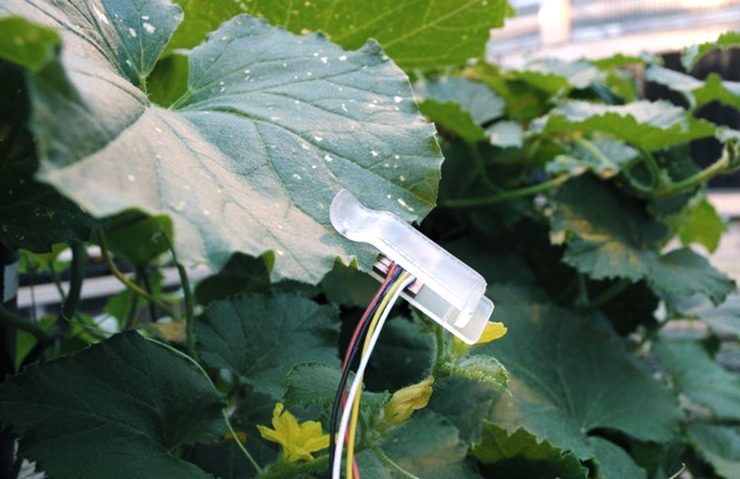 leaf sensor
