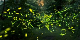 fireflies composite