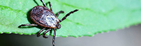 tick sitting on a leaf