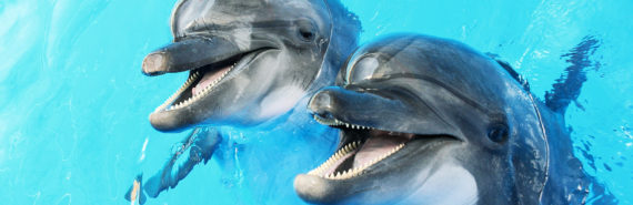 two smiling dolphins