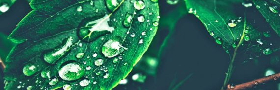 water on leaves (photosynthesis concept)