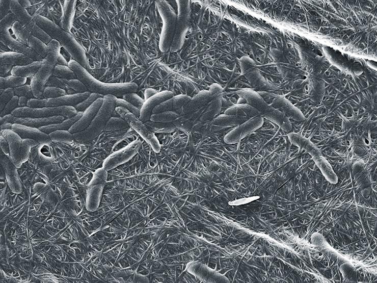 3D printing bacteria
