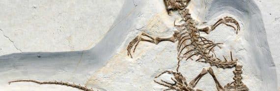 Vadasaurus herzogi