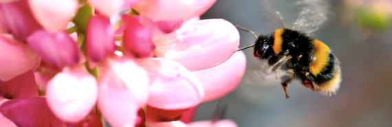 pink flower and bumble bee