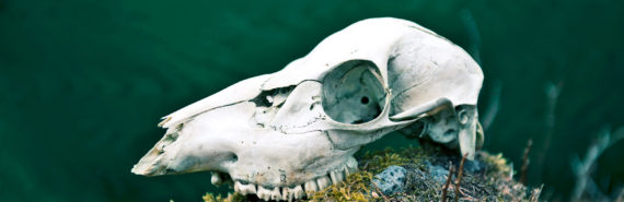 deer skull on mossy rock