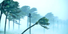 hurricane winds bend palm trees