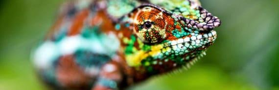 chameleon (chameleon-like material for computers concept)