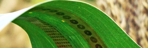 plant tattoo sensor