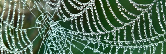 spider web with water droplets on it (diabetes implant concept)