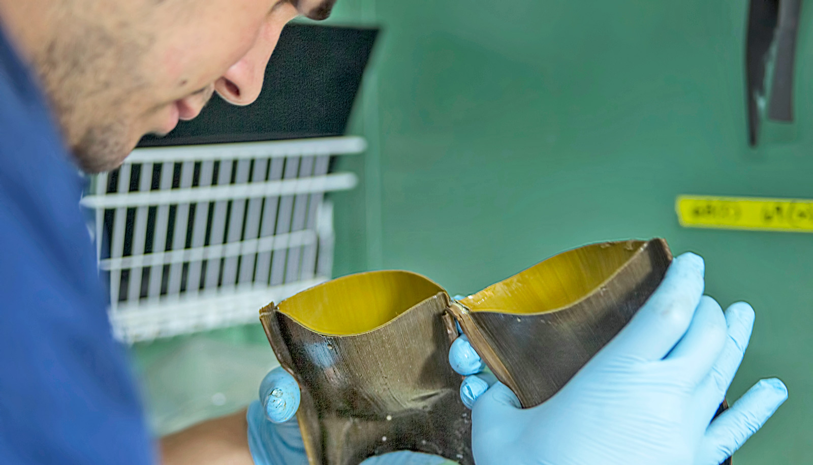 researcher looks into skate egg case
