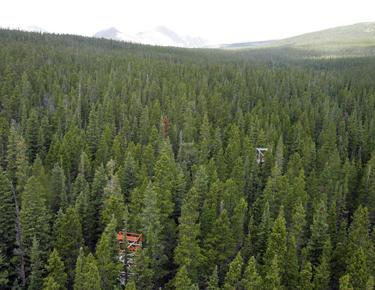 Colorado_Niwot ridge2