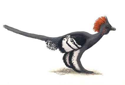 anchiornis-illustration2