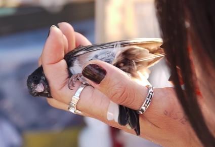 birds_smell_1