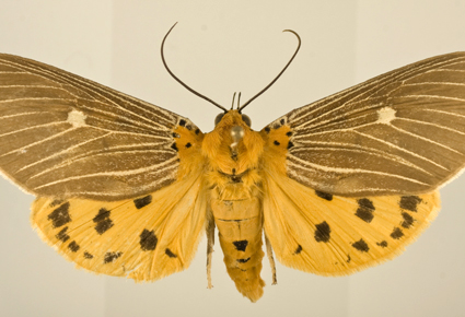 march_insect_1
