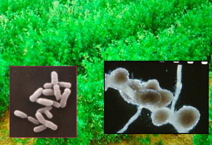 nitrogen_slide_news_1