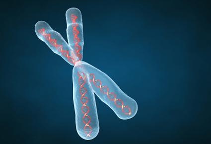 3d Chromosome