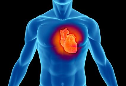 Fat Layer Is Hearts Gatekeeper Futurity