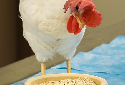 chicken_flax_1