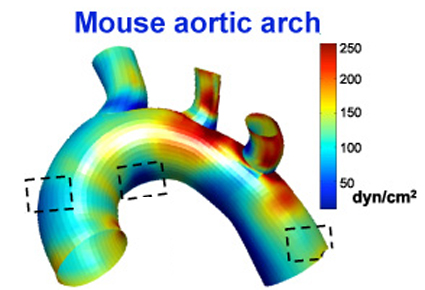 mouse_arch_1