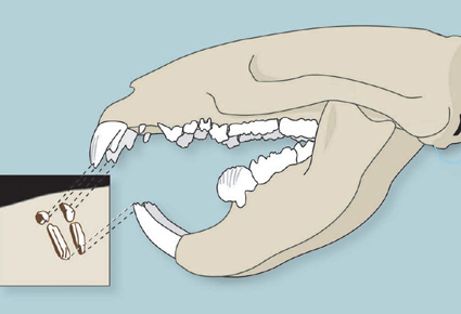 teeth interpretation_1