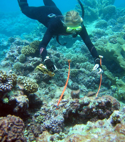 Madin coral reef dive_1
