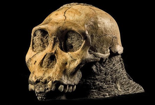 Ape-like human ancestor stirs debate