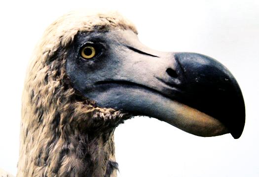 Should we bring back extinct species?