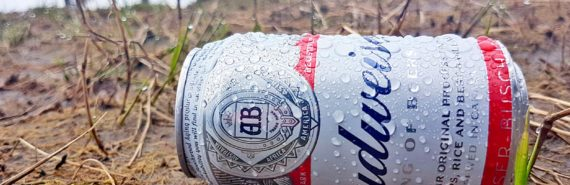 humid can of Budweiser on ground
