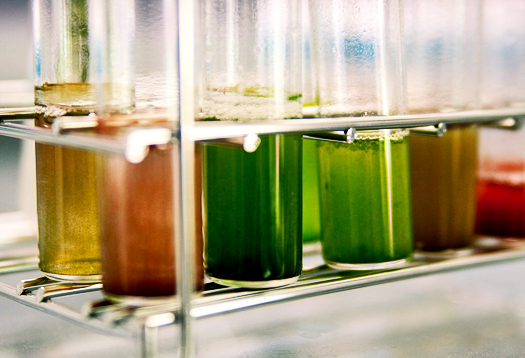 Drug-finder method coaxes more oil from algae