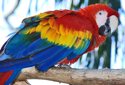 Genome shows macaw is one smart bird