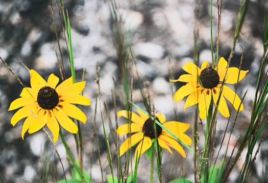 Plants do better far away from close relatives
