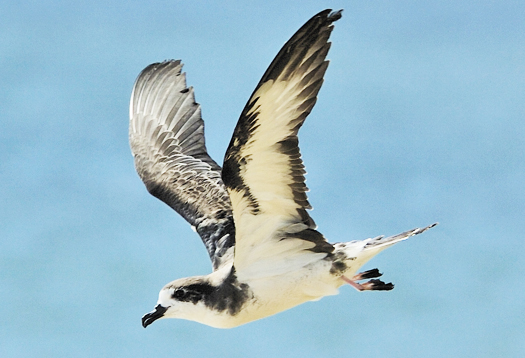 Seabird bones reveal effects of 'big' fishing