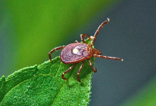Lyme disease vaccine trials show promise