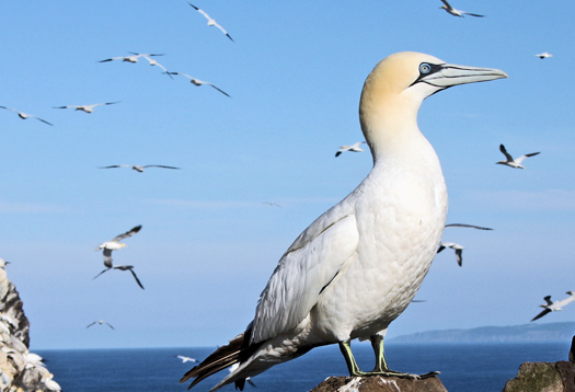 Sea birds 'do math' to divvy up turf
