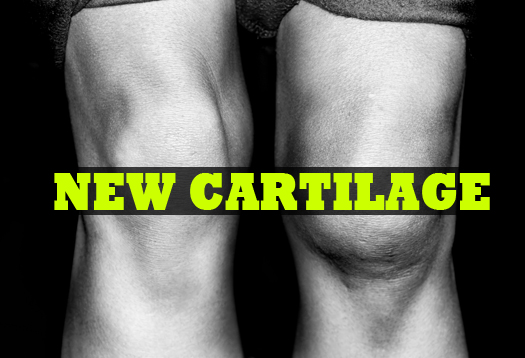 Grow fresh cartilage from adult stem cells