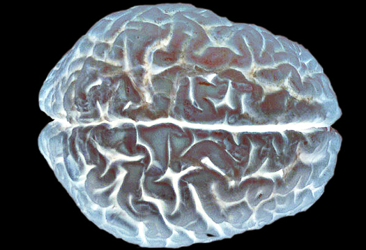 New theory upends view of how brain is wired