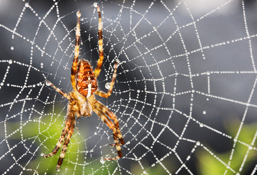 How spider webs 'reach out' to grab bugs