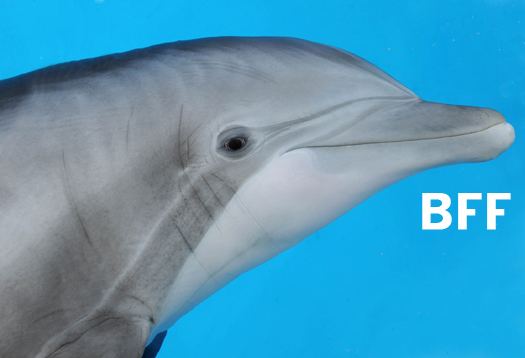 After 20 years, dolphin recalls old pal's whistle