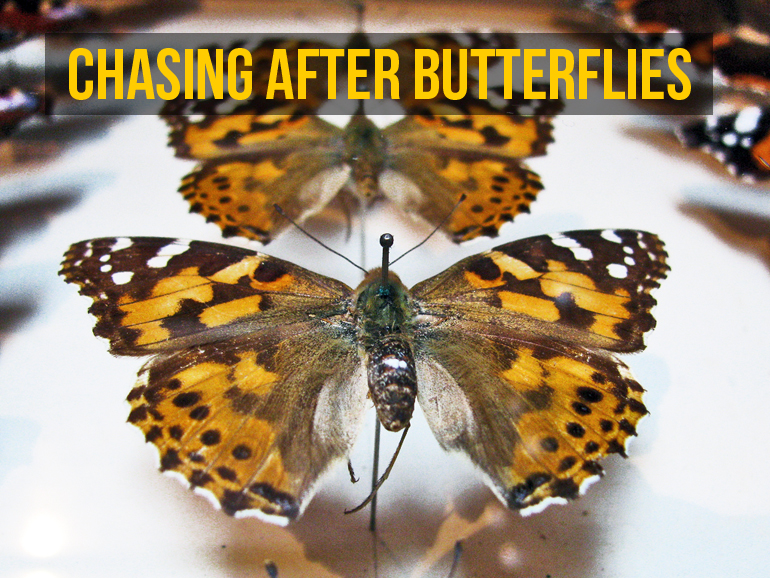 This national obsession with collecting insects coincided with America's even more ardent passion for the technology and industry—including photography and chemical colors—that would threaten the natural world and eliminate the need to go chasing after butterflies when one could just as easily find them in a book. (Credit: Yersinia pestis/Flickr)