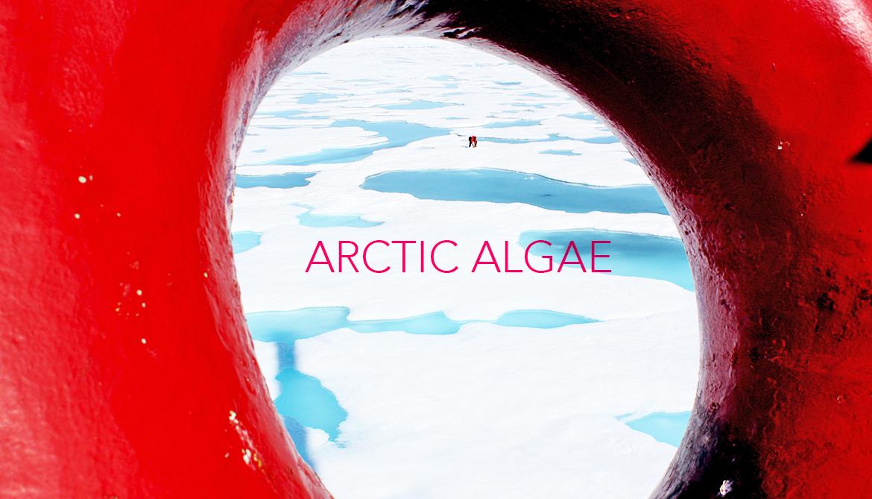 Arctic 'tree rings' show 650 years of sea ice change