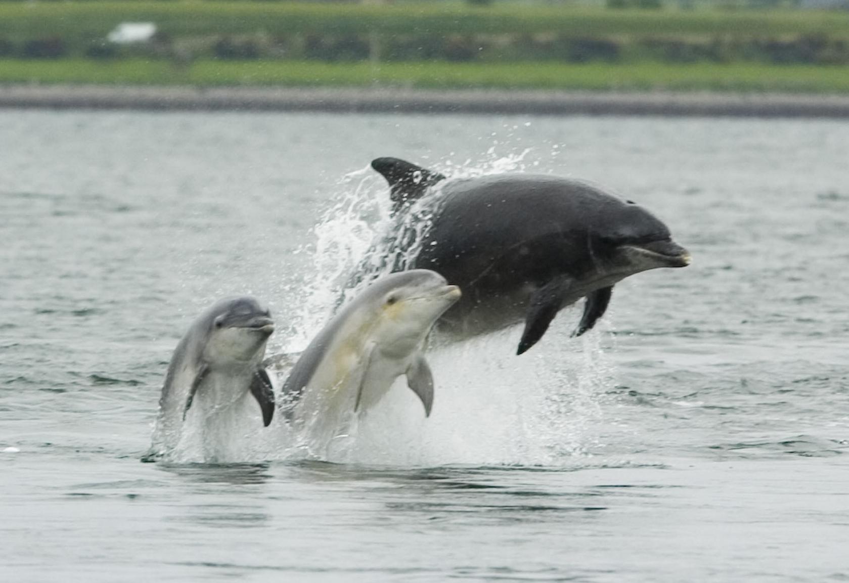 Monitors track noisy ships in dolphin habitat