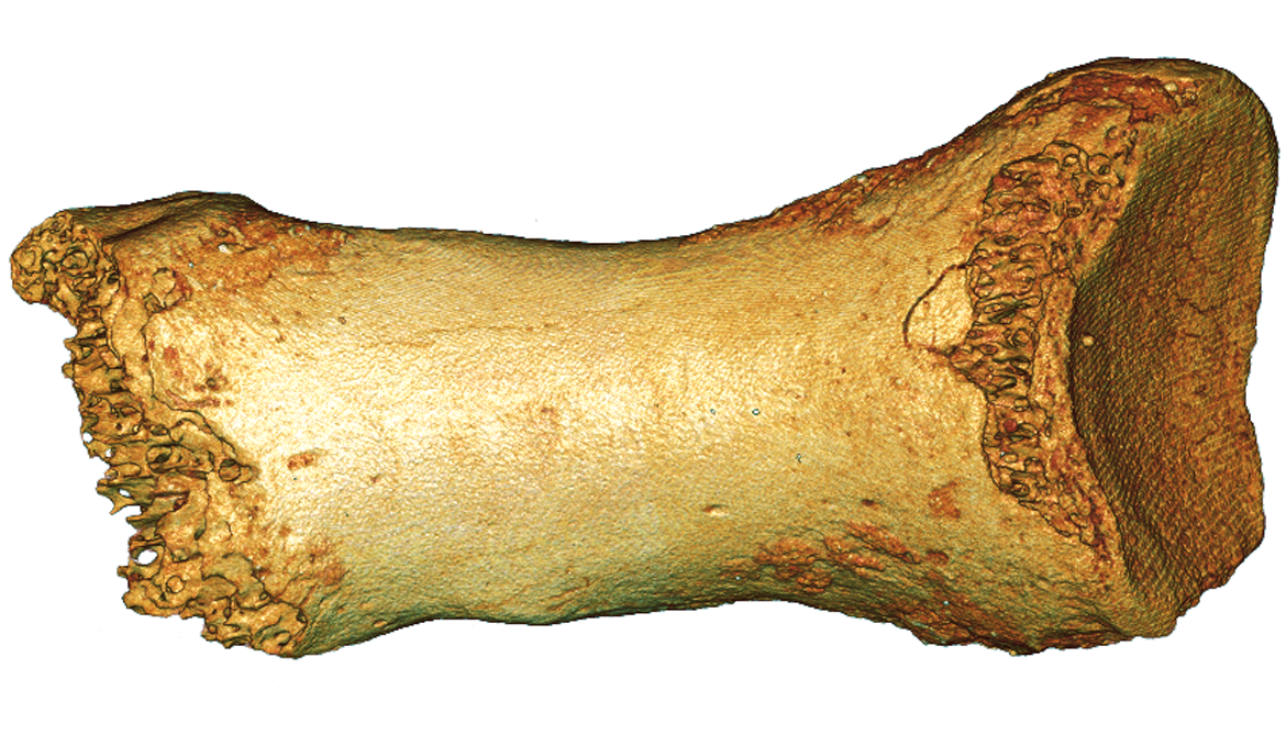 Toe bone DNA reveals Neanderthal interbreeding