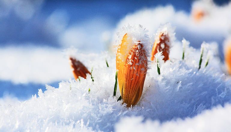 3 ways plants evolved to stand the cold