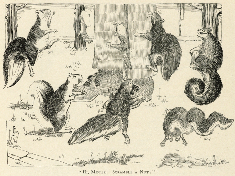 A 1903 cartoon from the Harvard Lampoon speaks to the ubiquity of squirrels in Boston. (Courtesy of Harvard University Archives)