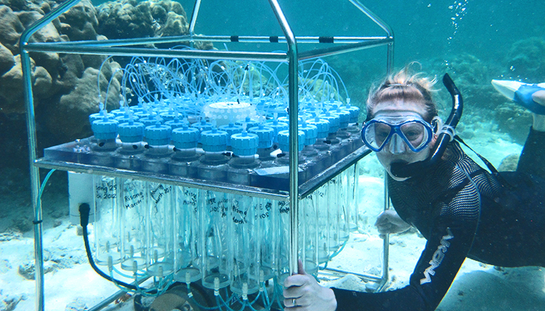 Some coral can live (and thrive) in acidic water