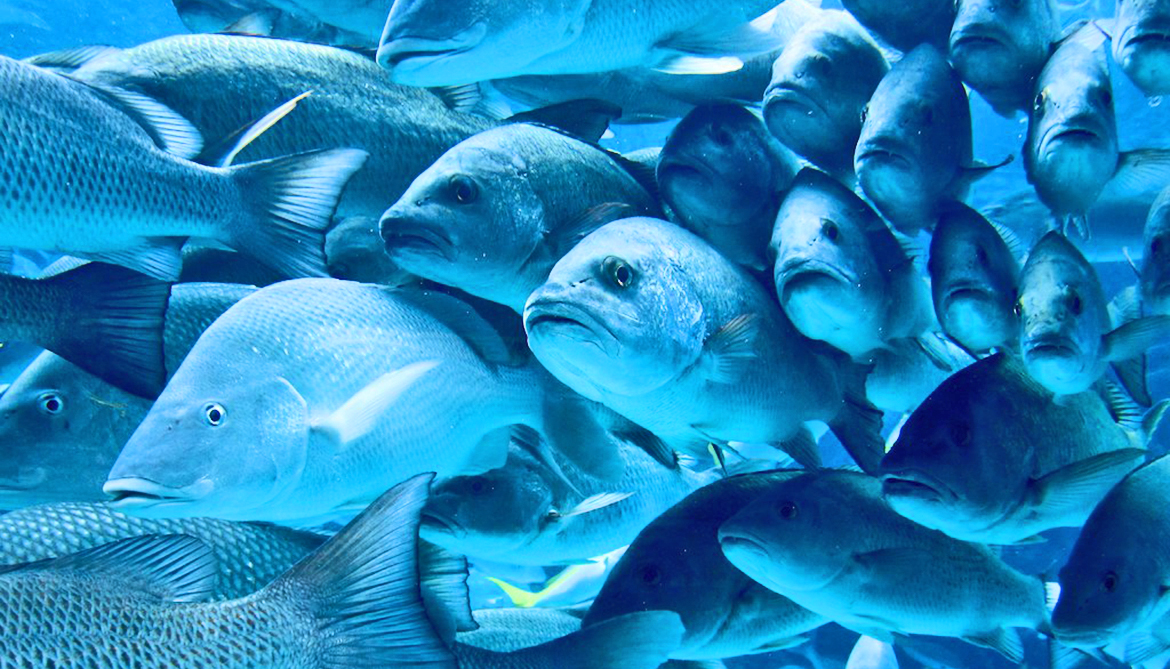 Team identifies 13,000 fish with only one glass of water