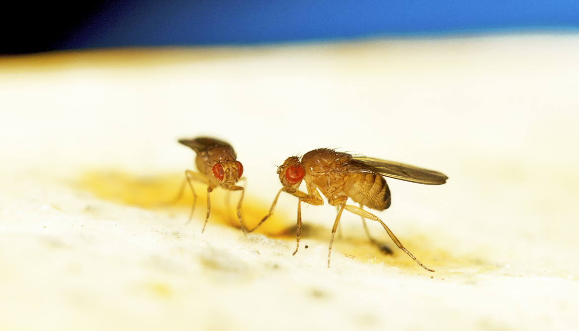 Brain cells turn male flies into fighters