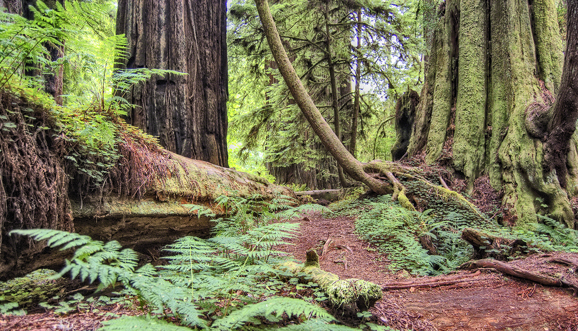 Old trees are 'star players' of soaking up carbon